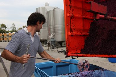 contract_winemaking_victoria